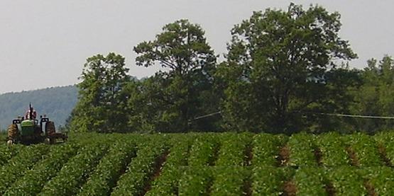 Steuben County farm