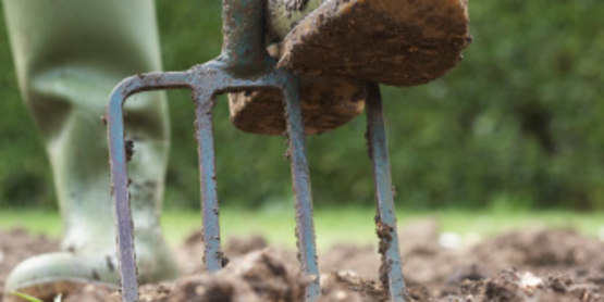 digging in the garden with a pitchfork
