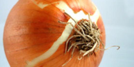 A sweet onion