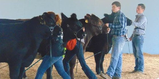 4-H and FFA youth from Cattaraugus, Chautauqua, Erie, Genesee, and Wyoming counties participated in the Chautauqua Beef Classic Show on May 14, 2016 at the Chautauqua County Fairgrounds.