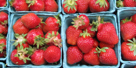 Strawberries are a June u-pick crop in the Niagara County.