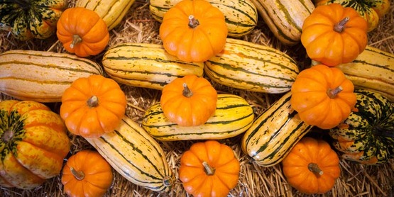 Pumpkins and squash are popular fall foods!