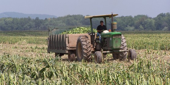 Agriculture in Cortland County is a $62.9 million dollar business.