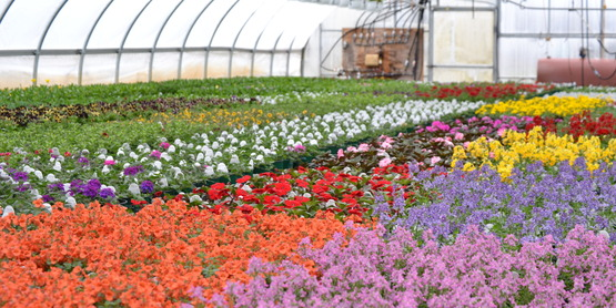 Cornell Cooperative Extension Ornamental Horticulture