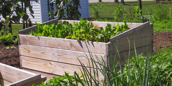 Raised Garden Beds for Vegetables
