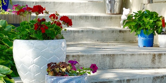 Container Gardens for Summer & Spring