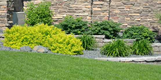 Improving on Existing Lawn Care
