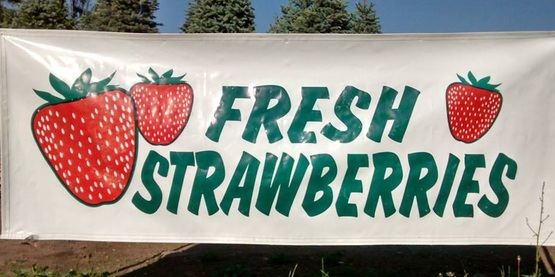 Check out your local Farm Stands, U-Picks, and Farmers' Markets for fresh in-season strawberries!