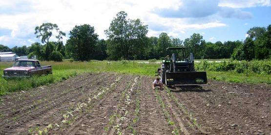 field crops...