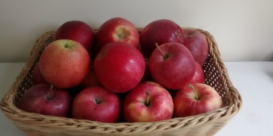 Basket of Fuji apples