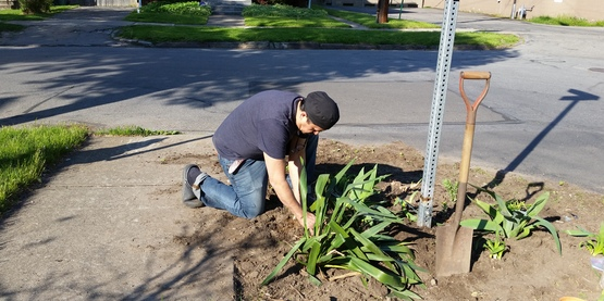 Gardening along curb and sidewalk