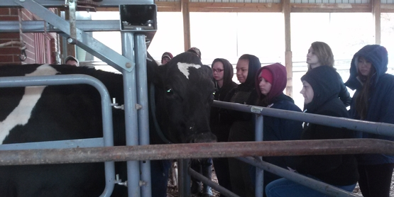 dairy BQA