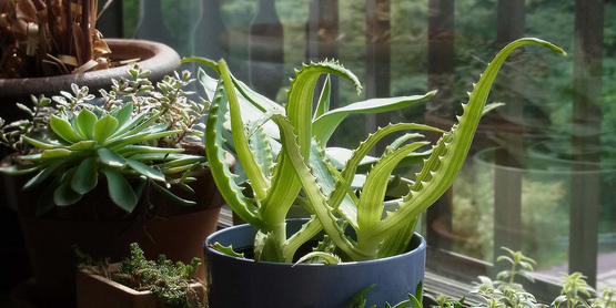 Houseplants are a great way to liven up your home and bring in nature