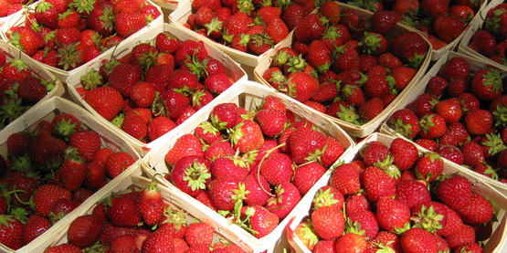 Strawberries are a June u-pick crop.