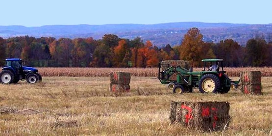 two tractors in autumn, baling hay