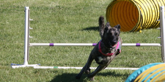 Cornell Cooperative Extension | 4-H Dog Agility Workshop