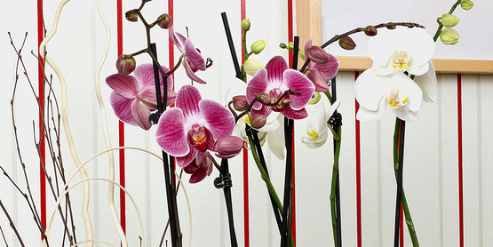 Growing and Caring for Houseplants and Orchids