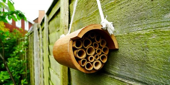 Make a bee hotel for native pollinators at this hands-on workshop on Wed. March 7