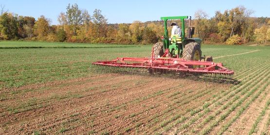 Tine weeding organic grains Hudson Valley Farm Hub