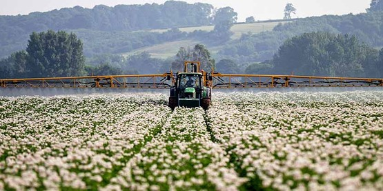 Spraying in a potato field for prevention of potato blight. Picture taken near Newark, Nottinghamshire.