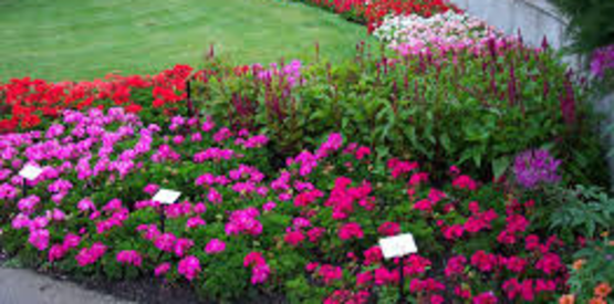 2017 Capital Region BEDDING PLANT CONFERENCE