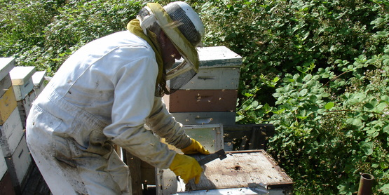 Beginning Beekeeping Rochester NY by NY Bee Wellness