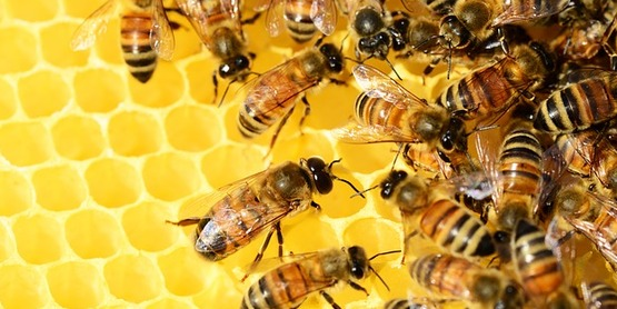 Bee MD: A Prescription for Better Bee Health
