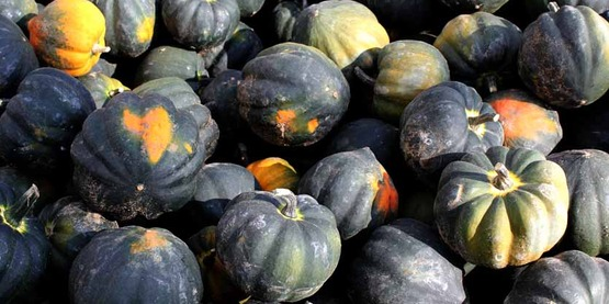 New York is 3rd in the nation in amount of squash grown (2013)