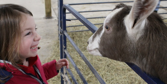 GOATS! We love the goats!