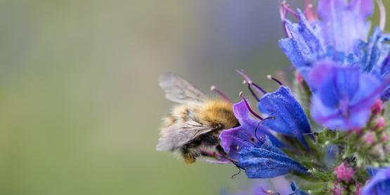 Creating a Pollinator Friendly Garden