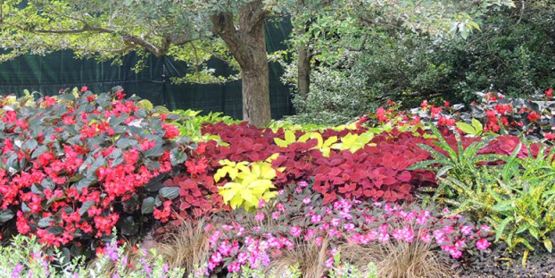 Using Annuals & Perennials in the Garden