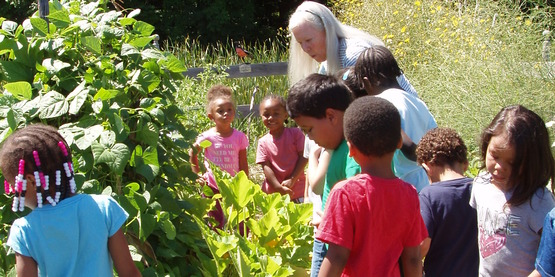 Children in the vegetable gardens
