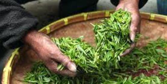 Medicinal Herb Farming Workshop