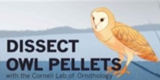 Owl Pellet Dissection Workshop