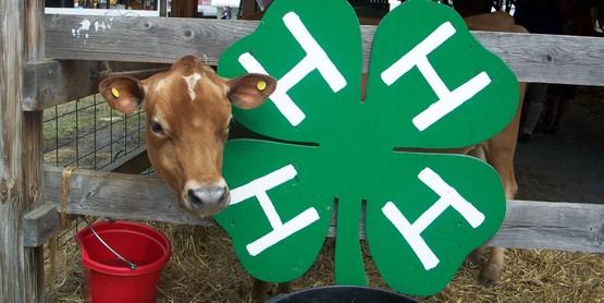 SUNY Cobleskill Livestock Judging Clinic