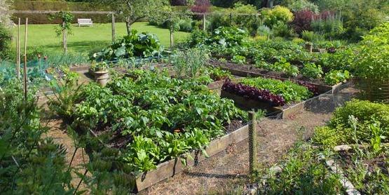 Cornell Gardening Classes