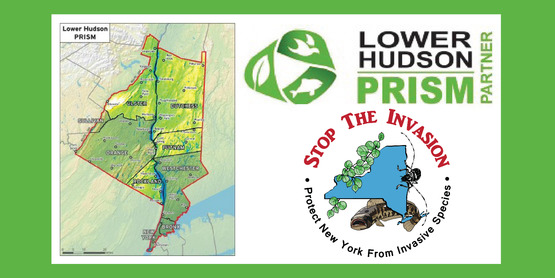 LHPRISM Lower Hudson Partnership for Regional Invasive Species Management