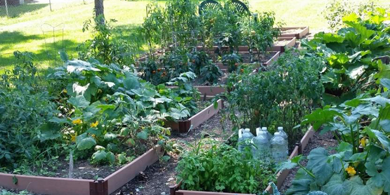 Learn how to start a vegetable garden this spring