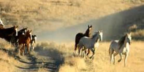Wild Mustang Observations and Discussion