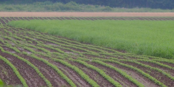 Oneida County's many varying soil types allows for a large variety of crops!