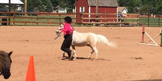 The 4-H Equine program at the Niagara County Fair