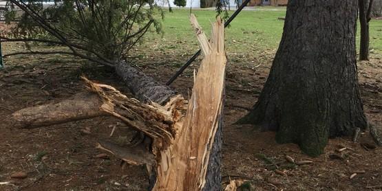 Storm Damaged Trees?