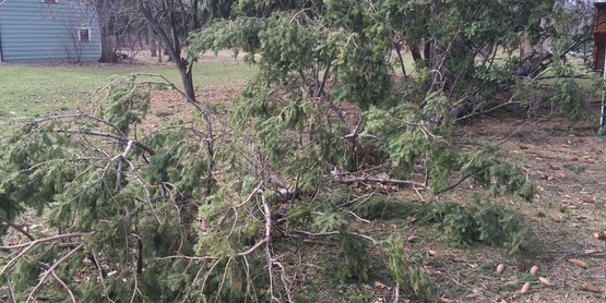 Storm Damage Trees?