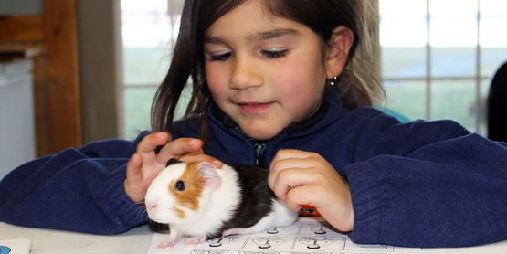 Animal Activity Night participant with her guinea pig