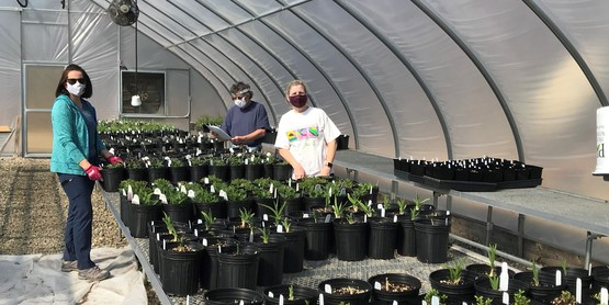 Potting perennial for 2021 Plant Sale
