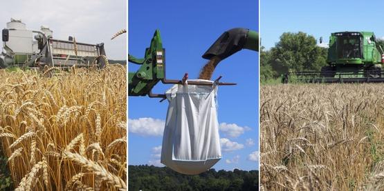 Grain Harvest composite HV Farm Hub 2016