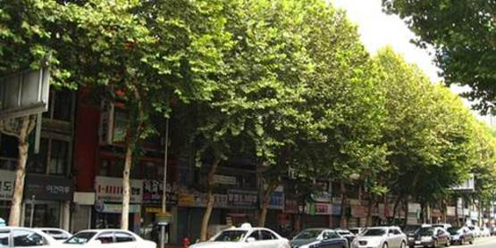 Sustainability: Urban Trees for a Changing Climate Webinar