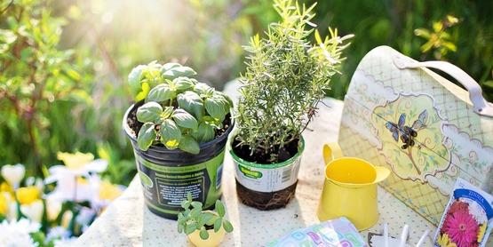 Decorative Herb Container Garden
