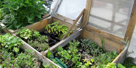 Cold frames can help acclimate your seedlings before planting.