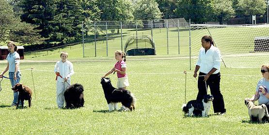 4-H Animal Sciences dog show, Madison County, NY